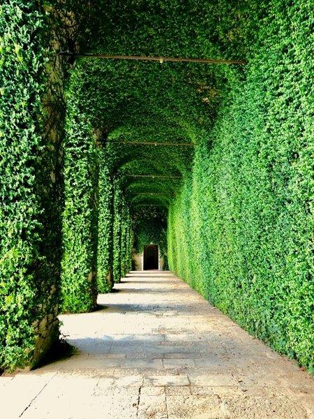 Zielone podcienia w ogrodzie prze zamku w Agliè